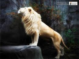 White Lion Wallpaper 3d ...
