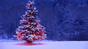 snowy christmas tree wallpaper. Unique Wallpaper Light Covered Snowy Christmas Tree For Wallpaper S