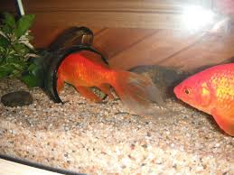 diy fish tank decor diy fish tank decorations living delil on the purpose and usage of