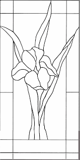 rose iris