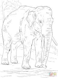 Small Picture Asiatic elephant coloring page Free Printable Coloring Pages