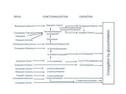 43 Clean Benzodiazepine Metabolism Chart