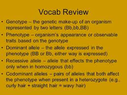 3 vocab review genotype the genetic make up of an organism represented by two letters