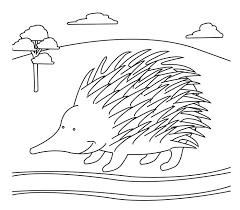 Australian Animal Template Animal Templates Draw Write Now Book