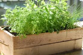 Herb Garden Top Tips For Starting Your Very Own Herb Garden Allam Property Group