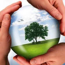ways to protect the environment the nature protection an essay about nature protection
