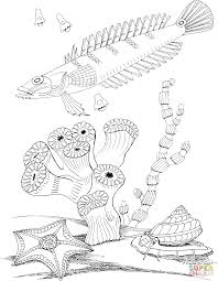Small Picture Sea Snail and Sea Star coloring page Free Printable Coloring Pages