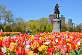 come play in our front yard the boston public garden