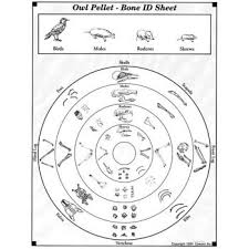 Owl Pellet Skeleton Reconstruction Chart Owl Pellets Use An Odor Free Owl Pellet For Your Next