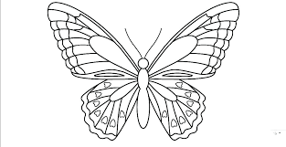 New Detailed Butterfly Coloring Pages For Free Printable Adults