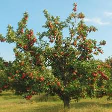 All About Growing Fruit Trees  Organic Gardening  MOTHER EARTH NEWSFruiting Trees
