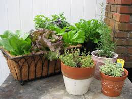 container gardening for beginners. Desperate Gardener: Easy Container Gardening: Combining Herbs And Vegetables Gardening For Beginners