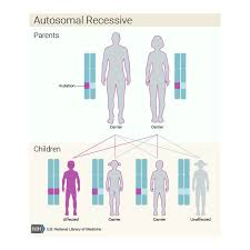 Cystic Fibrosis Inheritance Pattern Interesting Cystic Fibrosis Genetics Home Reference NIH