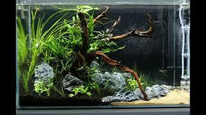 aquascape ada cube garden 60p a little piece of mekong day 1