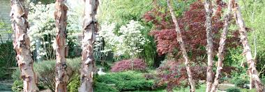 Small Picture Woodland Garden Design in DC Maryland Five Seasons Landscaping