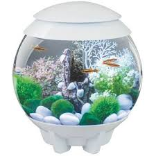 pin on bell jars domes pretty glass