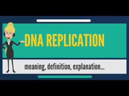 Dna Replication Definition What Is Dna Replication What Does Dna Replication Mean Dna