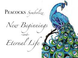 Peacock Beauty Quotes Best of 24 Best My Peacock Obsession Images On Pinterest Peacock