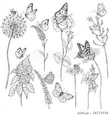 Wildflowers And Insects Sketchのイラスト素材 28375558 Pixta