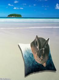hare on a beach
