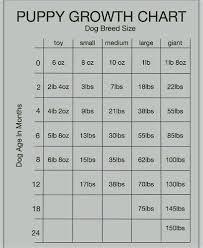 Pitbull Growth Chart Puppies Growth Stages Goldenacresdogs Com