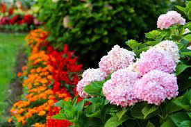 beautiful florida annual flowers
