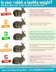 Rabbit Growth Rate Chart Is My Rabbit Too Fat Or Too Thin Monitoring Your Rabbits
