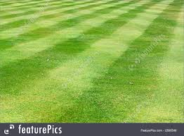 Soccer Field Grass Picture