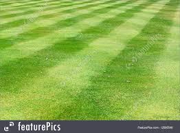 green grass soccer field. Brilliant Field Soccer Field Grass Throughout Green