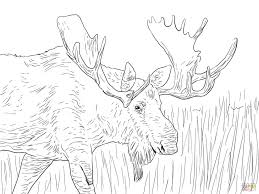 Small Picture Coloring Pages Moose Bull Coloring Page Free Printable Coloring