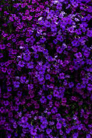 900+ Purple Background Images: Download ...