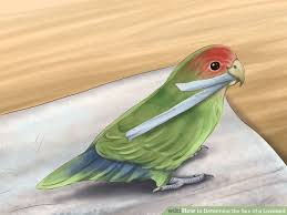 Top    Fun Facts About Parrots   Fun Facts You Need to Know  The Delhi Walla