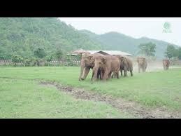 <b>Elephants</b> Run To Greeting A New Rescued Baby <b>Elephant</b> ...