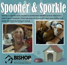 adoption love stories if you adopted a pet from bishop animal shelter and would like his her update on our website please email samantha org pictures and a brief