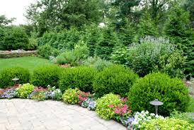 Small Picture Pictures of Shrubs for Landscaping 2016 Design Plans