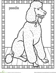 Small Picture Poodle Worksheet Educationcom