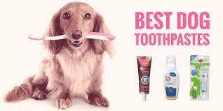 5 best dog toothpastes diy sentry enzymatic tartar control etc