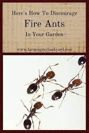 discourage fire ants in your garden