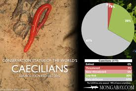 Chart The Worlds Most Endangered Caecilians