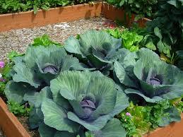 Best 25 Container Garden Ideas On Pinterest  Growing Vegetables Container Garden Ideas Vegetables