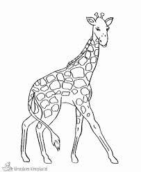 Giraf Kleurplaat Elegant Kleurplaten Giraf Archidev Kleurplaatsite