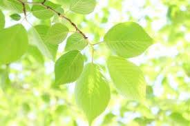 「新緑」の画像検索結果
