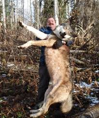 how big tall is a wolf hunters canada