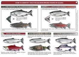 Salmon Identification Glacier Bay National Park Preserve