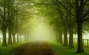 Behang Groen Landschap Natuur Bos Bomen Bladeren Wegen Hd