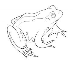 Frog Coloring For Kids - Animal - Pictures Of Frogs Coloring Pages ...