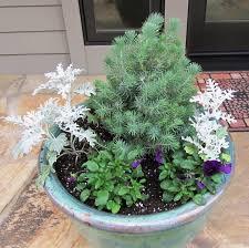 Best 25 Winter Window Boxes Ideas On Pinterest  Christmas Window Container Garden Ideas For Winter