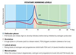 Estrogen And Progesterone Levels In Pregnancy Chart Menstrual Cycle Bioninja