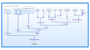 Phylogenetic Tree Of Kingdom Animalia By Caroline E On Prezi