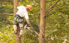 Tree Removal Company - Finding the Right One - The Dedicated House